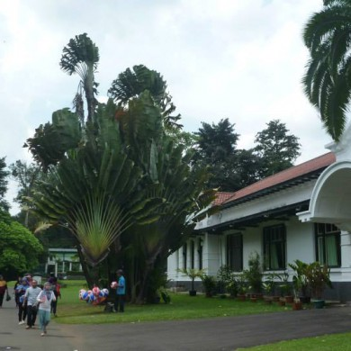 Jul 04, 2013 - Visit of the Botanical garden at Bogor with Moko Aguswan. Beautiful trees and plants. Amazing nature. — in Bogor, Indonesia.